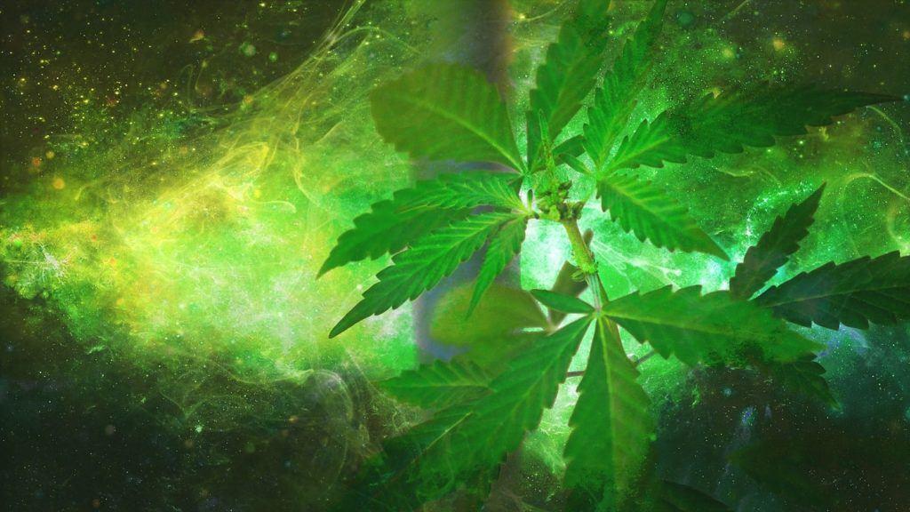 Grün Marijuana